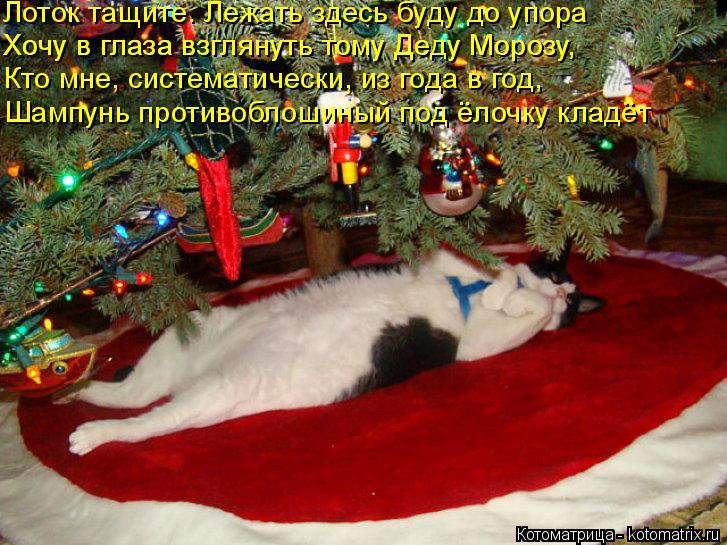 Котоматрица: Лоток тащите. Лежать здесь буду до упора  Хочу в глаза взглянуть тому Деду Морозу, Хочу в глаза взглянуть тому Деду Морозу, Кто мне, системат?