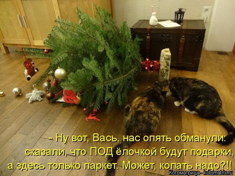 Котоматрица: - Ну вот, Вась, нас опять обманули: сказали, что ПОД ёлочкой будут подарки, а здесь только паркет. Может, копать надо?!!