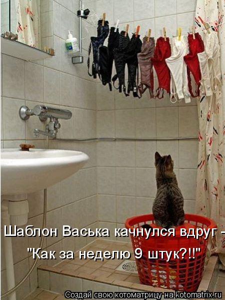 "Котоматрица: Шаблон Васька качнулся вдруг - ""Как за неделю 9 штук?!!"""