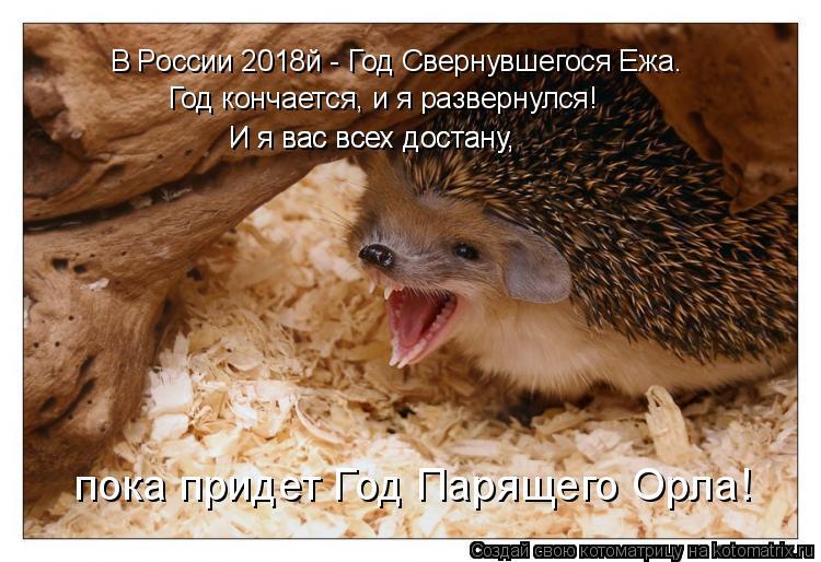 Котоматрица: В России 2018й - Год Свернувшегося Ежа. Год кончается, и я развернулся! И я вас всех достану, И я вас всех достану, пока придет Год Парящего Орла!