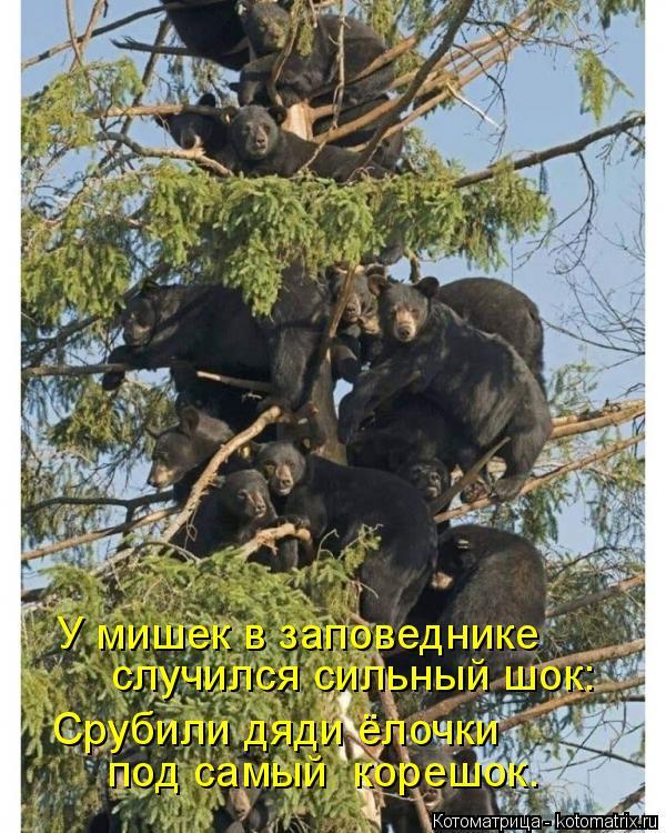 Котоматрица: У мишек в заповеднике случился сильный шок: Срубили дяди ёлочки под самый  корешок.