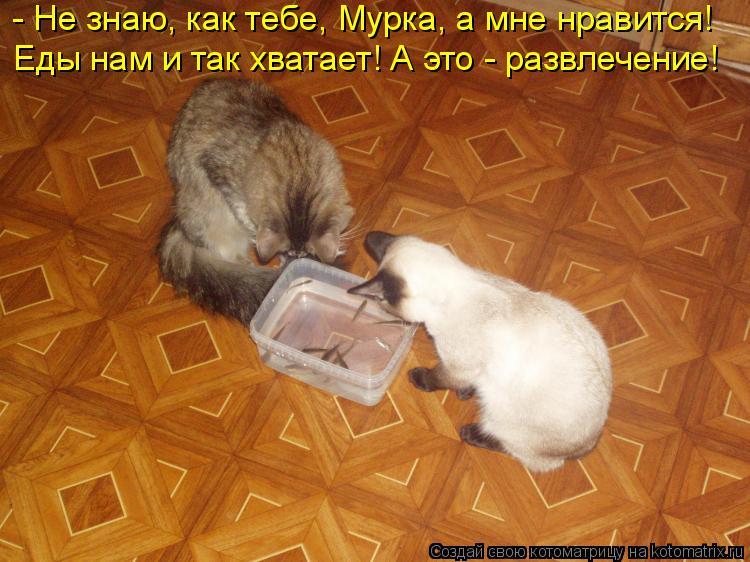 Котоматрица: - Не знаю, как тебе, Мурка, а мне нравится! Еды нам и так хватает! А это - развлечение!