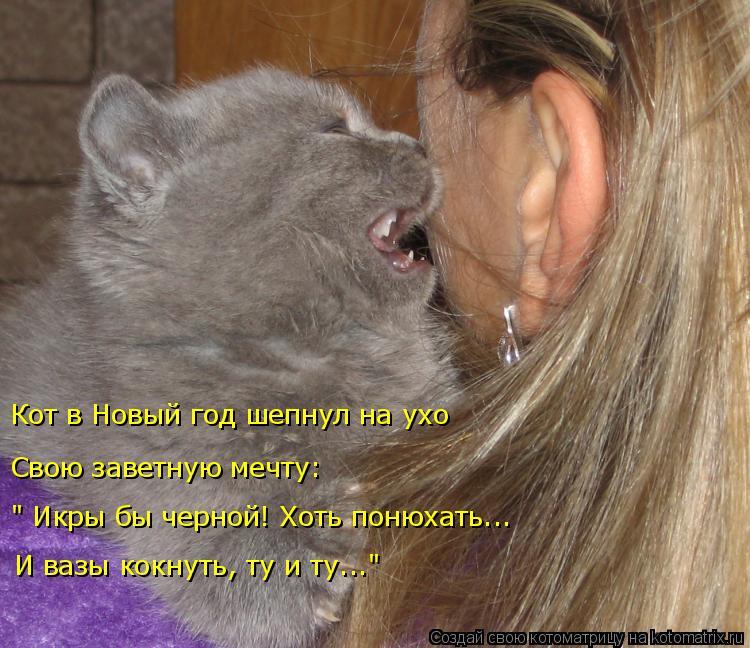 """Котоматрица: Кот в Новый год шепнул на ухо Свою заветную мечту: """" Икры бы черной! Хоть понюхать... И вазы кокнуть, ту и ту..."""""""