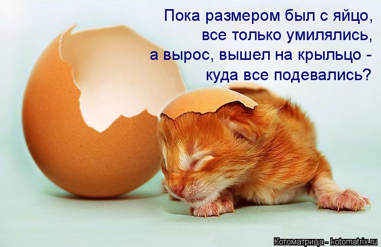 Котоматрица: Пока размером был с яйцо, все только умилялись, а вырос, вышел на крыльцо -  куда все подевались?