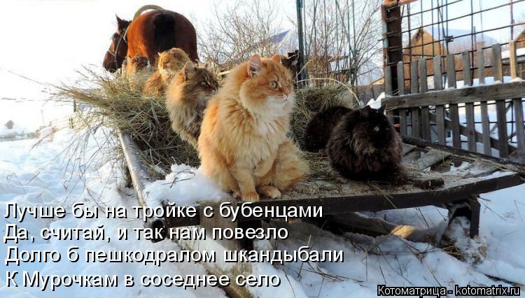 Котоматрица: Лучше бы на тройке с бубенцами  Да, считай, и так нам повезло  Долго б пешкодралом шкандыбали  К Мурочкам в соседнее село