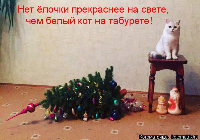 Котоматрица: Нет ёлочки прекраснее на свете, чем белый кот на табурете!