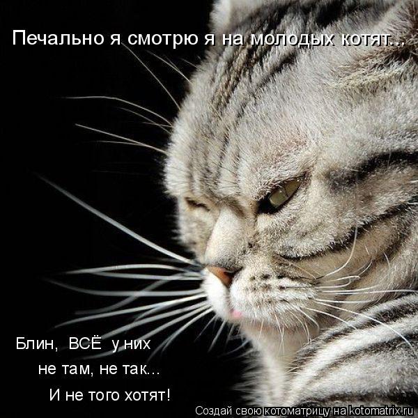 Котоматрица: Печально я смотрю я на молодых котят... Блин,  ВСЁ  у них  не там, не так...  И не того хотят!