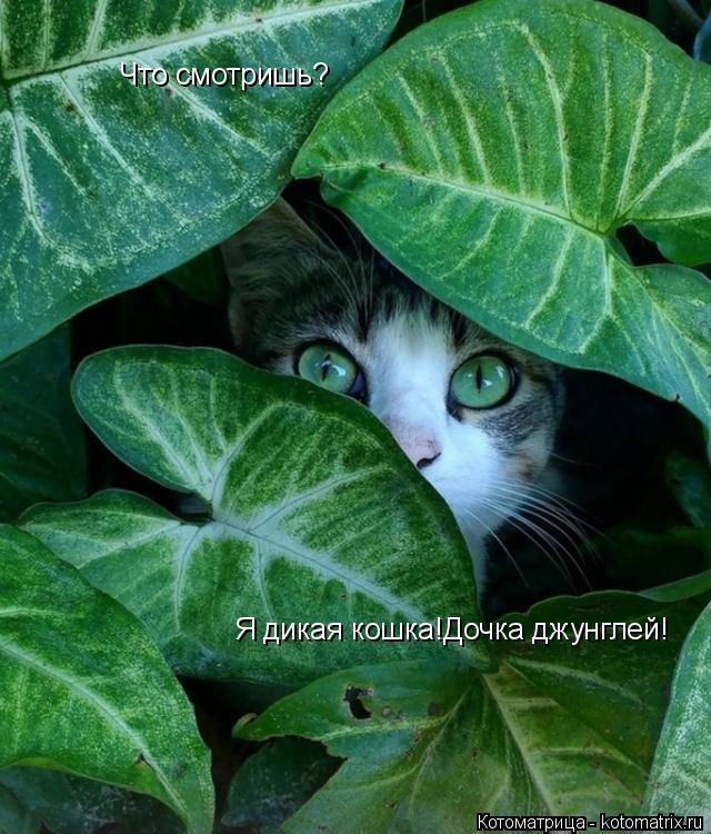 Котоматрица: Что смотришь? Я дикая кошка!Дочка джунглей!