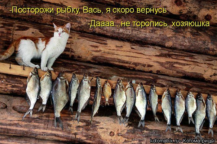 Котоматрица: -Посторожи рыбку, Вась, я скоро вернусь -Даааа...не торопись, хозяюшка