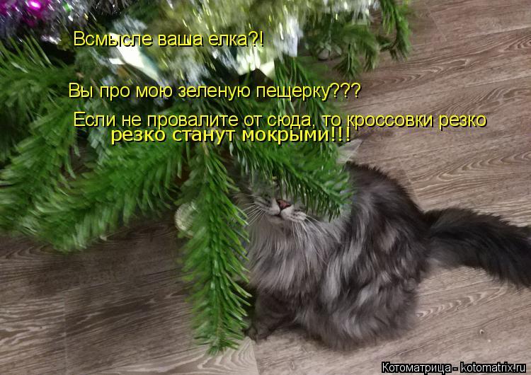 Котоматрица: Всмысле ваша елка?! Вы про мою зеленую пещерку??? Если не провалите от сюда, то кроссовки резко  резко станут мокрыми!!!