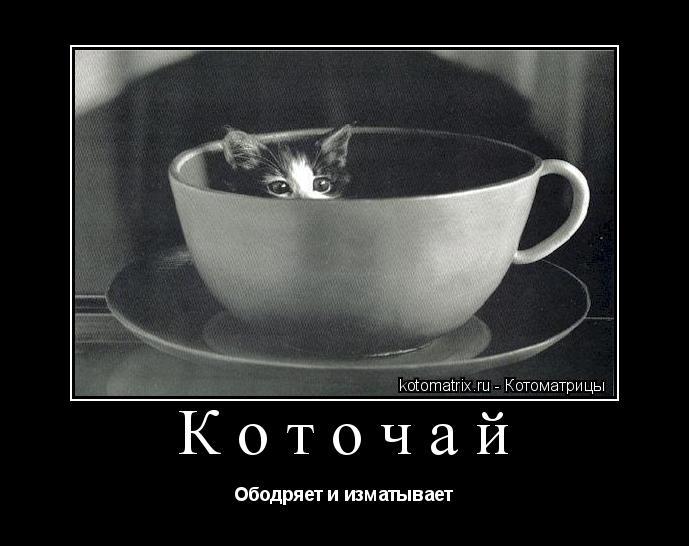 Котоматрица: Коточай Ободряет и изматывает