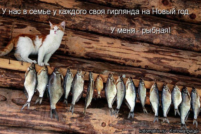 Котоматрица: У нас в семье у каждого своя гирлянда на Новый год. У меня - рыбная!