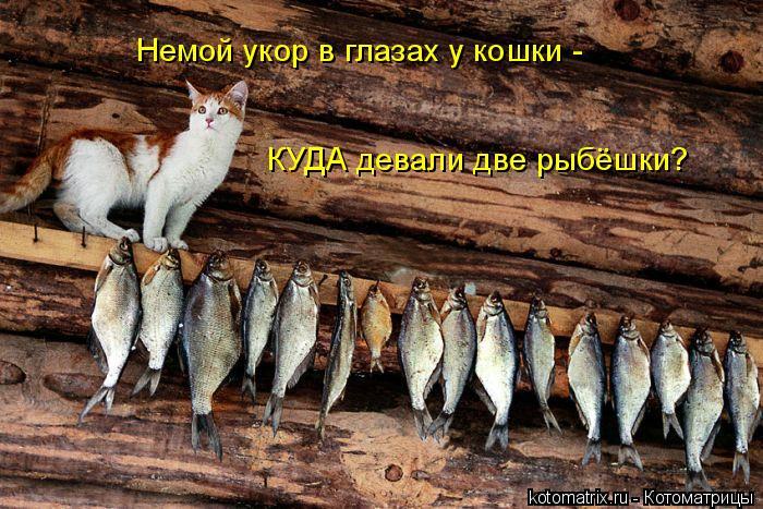 Котоматрица: Немой укор в глазах у кошки - КУДА девали две рыбёшки?