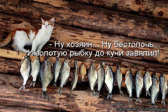 Котоматрица: - Ну хозяин... Ну бестолочь... И золотую рыбку до кучи завялил!