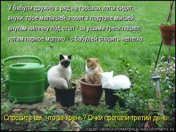 Котоматрица: У бабули дружно в ряд на горшках коты сидят, внуки, трое малышей, ловят в подполе мышей, внукам килечку под стол - за ушами треск пошел, котам ?
