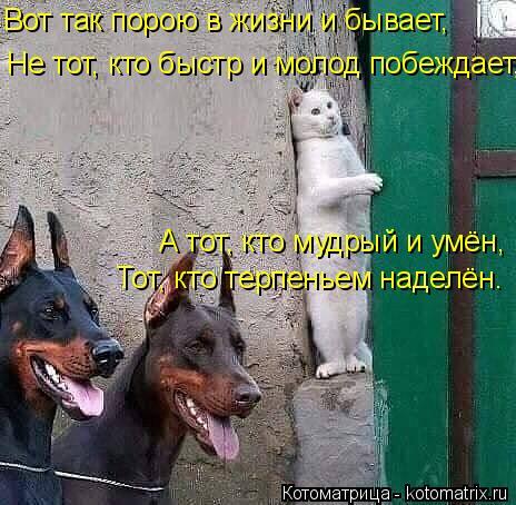 Котоматрица: Вот так порою в жизни и бывает, Не тот, кто быстр и молод побеждает, А тот, кто мудрый и умён, Тот, кто терпеньем наделён.