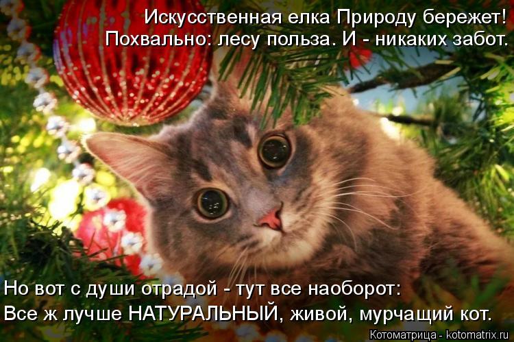 Котоматрица: Искусственная елка Природу бережет! Похвально: лесу польза. И - никаких забот. Все ж лучше НАТУРАЛЬНЫЙ, живой, мурчащий кот. Но вот с души отр?