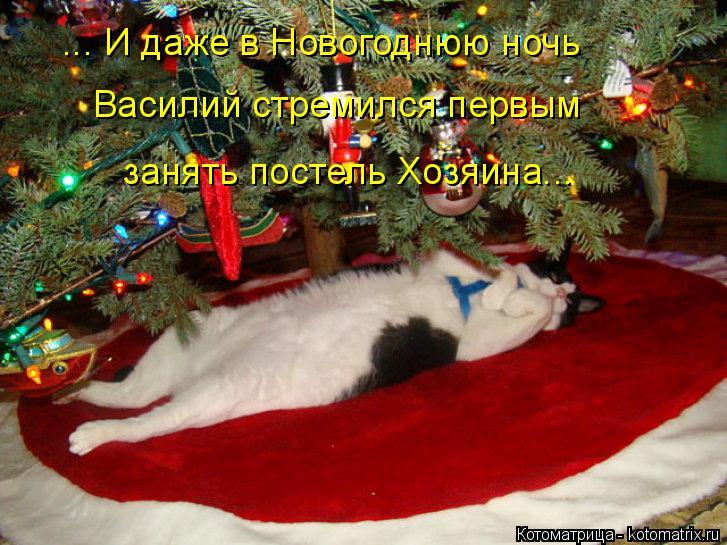 Котоматрица: ... И даже в Новогоднюю ночь Василий стремился первым занять постель Хозяина...