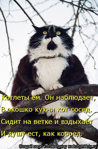 Котоматрица: В окошко кухни кот-сосед. Котлеты ем. Он наблюдает, Сидит на ветке и вздыхает И душу ест, как короед.