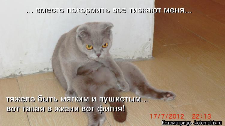 Котоматрица: ... вместо покормить все тискают меня... тяжело быть мягким и пушистым... тяжело быть мягким и пушистым... вот такая в жизни вот фигня!