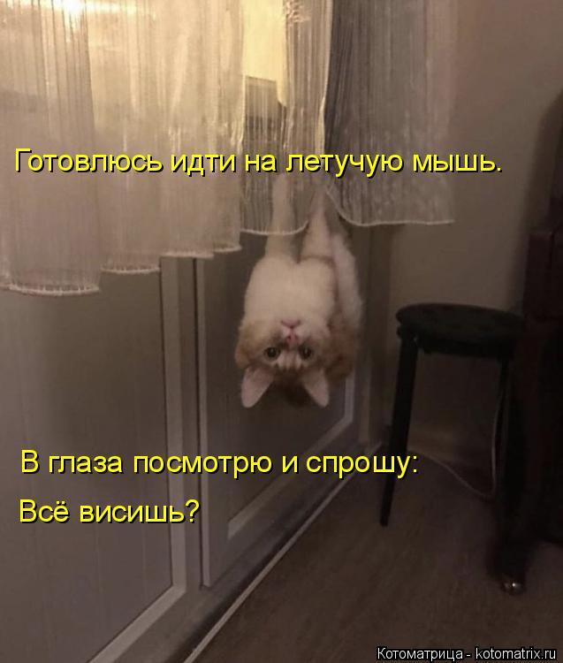 Котоматрица: Готовлюсь идти на летучую мышь. В глаза посмотрю и спрошу: Всё висишь?