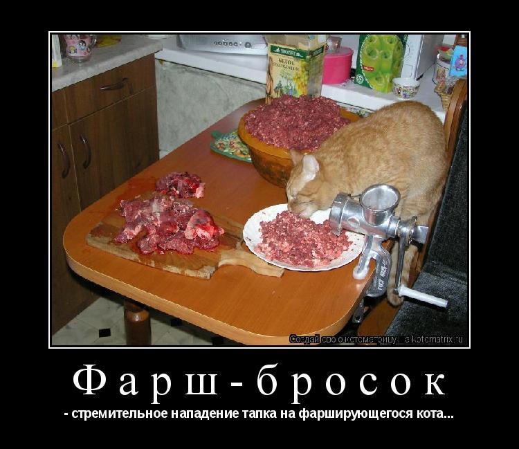 Котоматрица: Фарш-бросок - стремительное нападение тапка на фарширующегося кота...