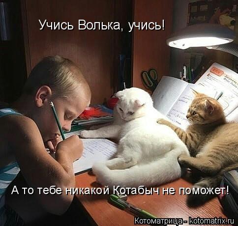Котоматрица: Учись Волька, учись!  А то тебе никакой Котабыч не поможет!
