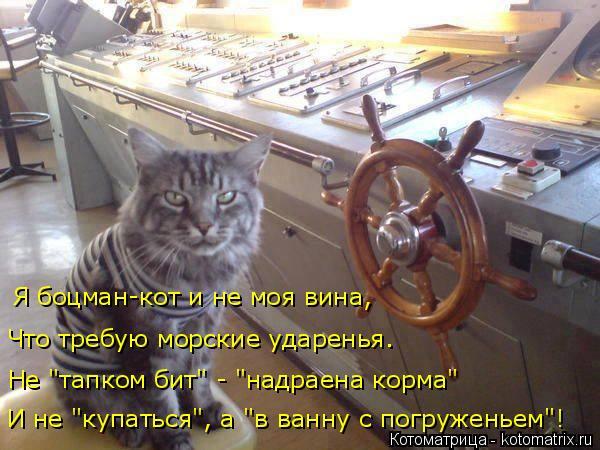 """Котоматрица: И не """"купаться"""", а """"в ванну с погруженьем""""! Не """"тапком бит"""" - """"надраена корма"""" Что требую морские ударенья. Я боцман-кот и не моя вина,"""