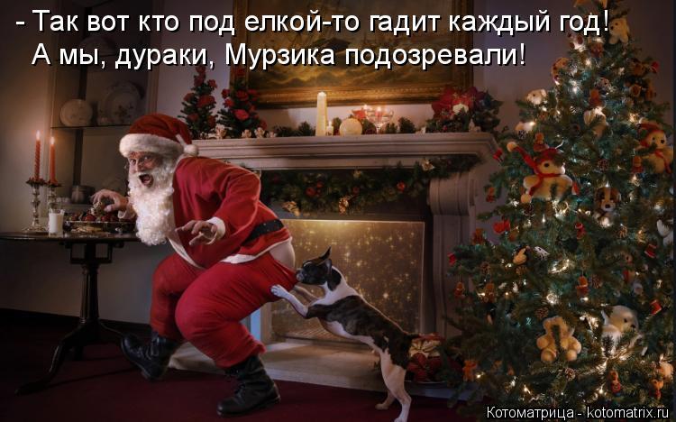 Котоматрица: - Так вот кто под елкой-то гадит каждый год! А мы, дураки, Мурзика подозревали!