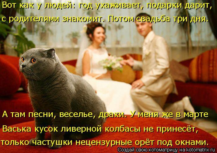 Котоматрица: Вот как у людей: год ухаживает, подарки дарит,  с родителями знакомит. Потом свадьба три дня. А там песни, веселье, драки. У меня же в марте  Вас