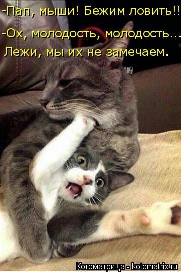 Котоматрица: -Пап, мыши! Бежим ловить!! -Ох, молодость, молодость... Лежи, мы их не замечаем.