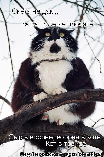 Котоматрица: Снега не дам,,  сыра тоже не просите Сыр в вороне, ворона в коте Кот в трансе
