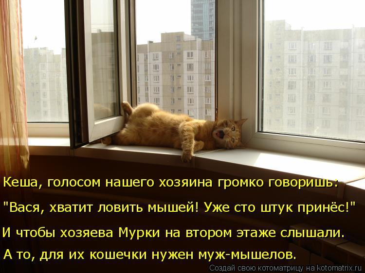 """Котоматрица: А то, для их кошечки нужен муж-мышелов. И чтобы хозяева Мурки на втором этаже слышали. """"Вася, хватит ловить мышей! Уже сто штук принёс!""""  Кеша, г"""