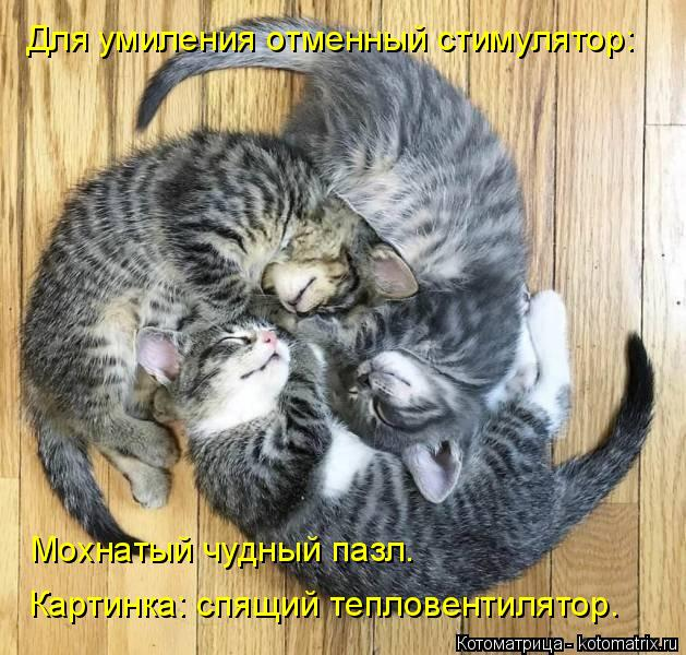 Котоматрица: Мохнатый чудный пазл. Для умиления отменный стимулятор: Картинка: спящий тепловентилятор.
