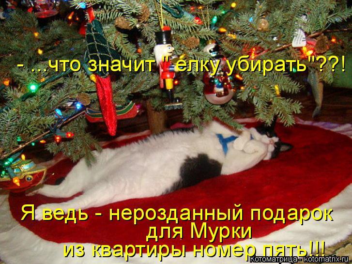 """Котоматрица: Я ведь - нерозданный подарок  из квартиры номер пять!!! для Мурки  - ...что значит """" елку убирать""""??!"""