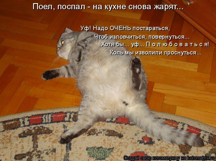 Котоматрица: Поел, поспал - на кухне снова жарят... Уф! Надо ОЧЕНЬ постараться, Чтоб изловчиться, повернуться... Хотя бы... уф... П о л ю б о в а т ь с я! Коль мы из