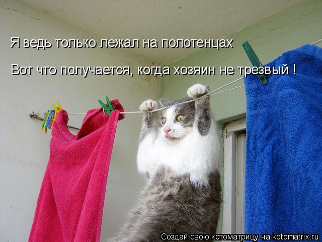Котоматрица: Вот что получается, когда хозяин не трезвый ! Я ведь только лежал на полотенцах