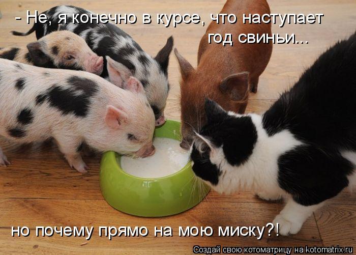 Котоматрица: - Не, я конечно в курсе, что наступает год свиньи... но почему прямо на мою миску?!