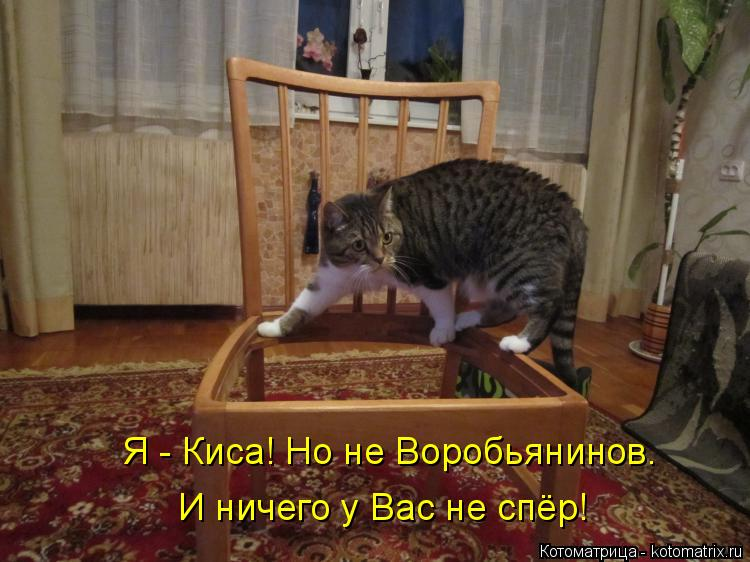 Котоматрица: Я - Киса! Но не Воробьянинов.  И ничего у Вас не спёр!