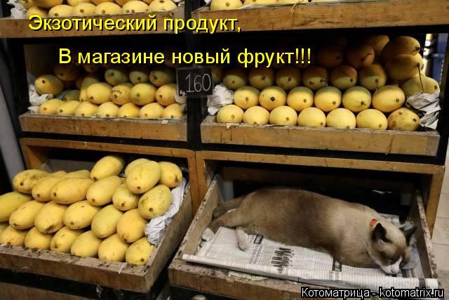 Котоматрица: Экзотический продукт, В магазине новый фрукт!!!
