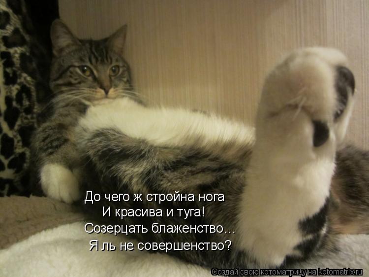 Котоматрица: До чего ж стройна нога И красива и туга! Созерцать блаженство… Я ль не совершенство?