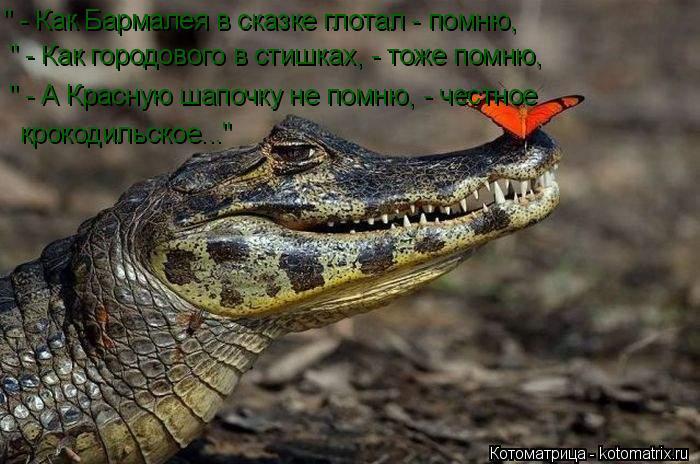 """Котоматрица: """" - Как Бармалея в сказке глотал - помню, """" - Как городового в стишках, - тоже помню, """" - А Красную шапочку не помню, - честное крокодильское..."""""""