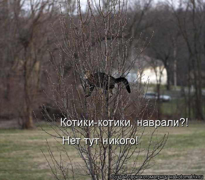 Котоматрица: Котики-котики, наврали?! Нет тут никого!