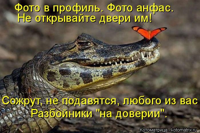 """Котоматрица: Фото в профиль. Фото анфас. Не открывайте двери им! Сожрут, не подавятся, любого из вас Разбойники """"на доверии""""."""