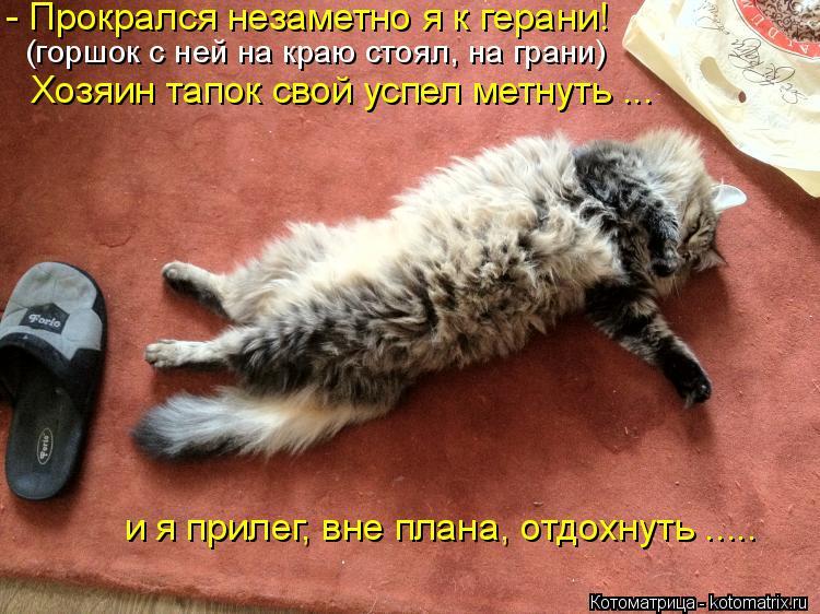 Котоматрица: - Прокрался незаметно я к герани! (горшок с ней на краю стоял, на грани) Хозяин тапок свой успел метнуть ... и я прилег, вне плана, отдохнуть .....