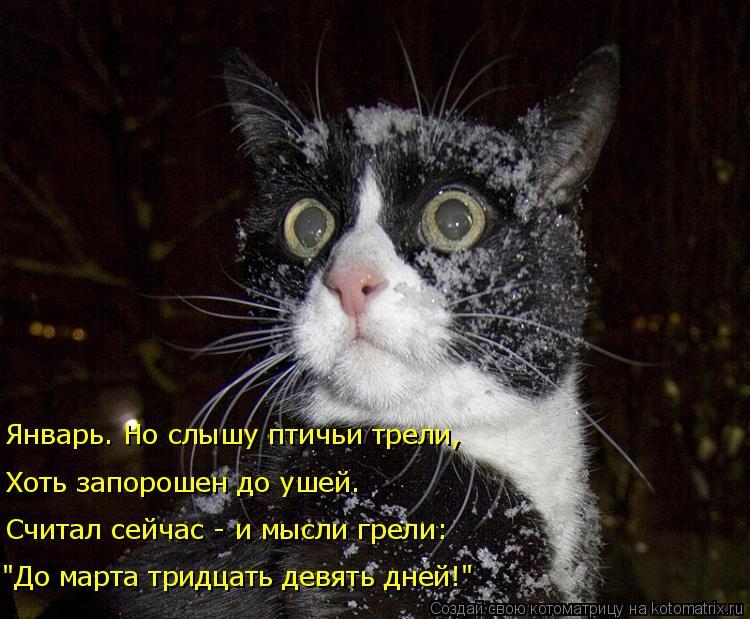 """Котоматрица: Январь. Но слышу птичьи трели, Хоть запорошен до ушей. Считал сейчас - и мысли грели: """"До марта тридцать девять дней!"""""""