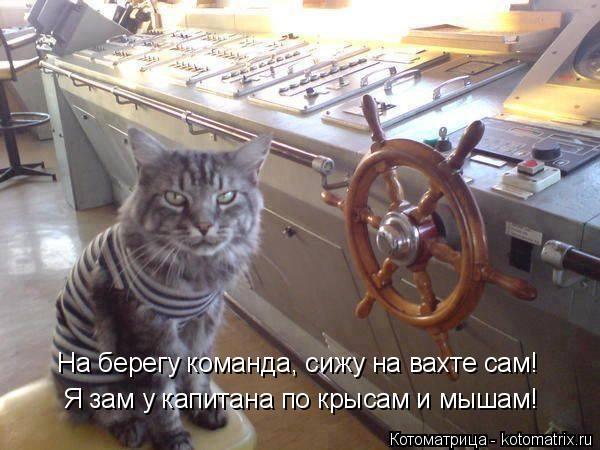 Котоматрица: Я зам у капитана по крысам и мышам! На берегу команда, сижу на вахте сам!