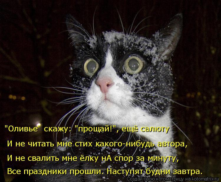 """Котоматрица: """"Оливье"""" скажу: """"прощай!"""", ещё салюту И не читать мне стих какого-нибудь автора, И не свалить мне ёлку нА спор за минуту, Все праздники прошли. Н"""