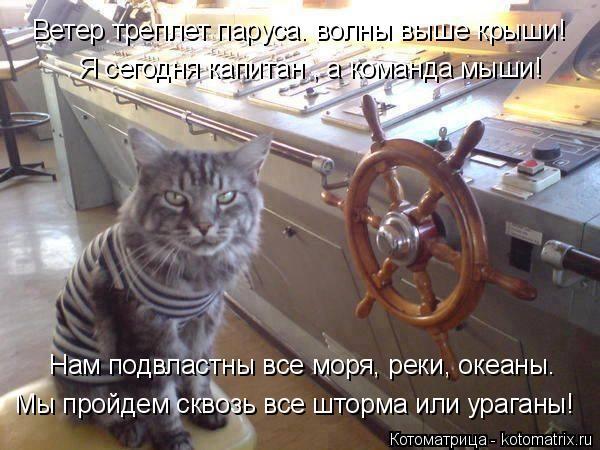 Котоматрица: Я сегодня капитан , а команда мыши! Нам подвластны все моря, реки, океаны. Мы пройдем сквозь все шторма или ураганы! Ветер треплет паруса. вол?