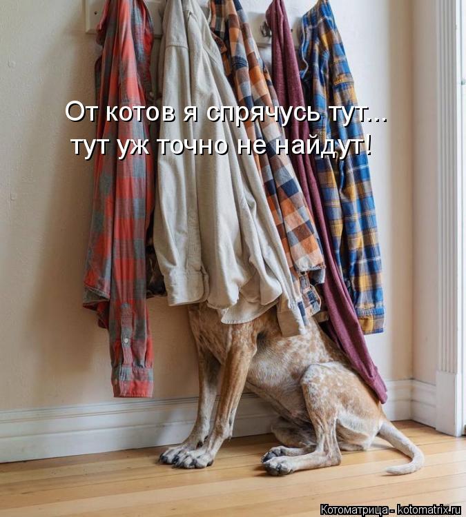 Котоматрица: От котов я спрячусь тут... тут уж точно не найдут!